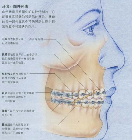 正畸牙齿移动的原理_正畸中牙齿移动的原理